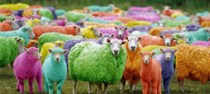 colour-blind-test-x-rite-sheep